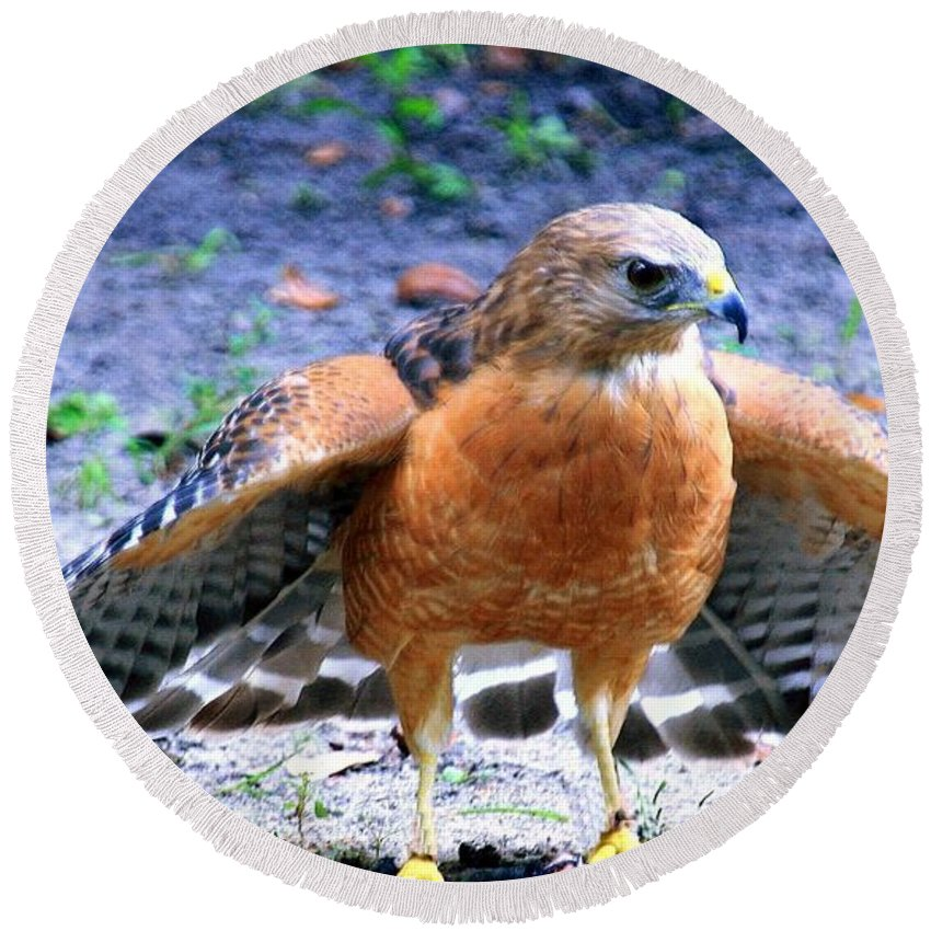 Bird Round Beach Towel featuring the photograph Red Shoulder Hawk by Randy Matthews
