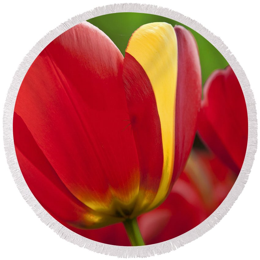 Tulip Round Beach Towel featuring the photograph Red Tulips 1 by Heiko Koehrer-Wagner
