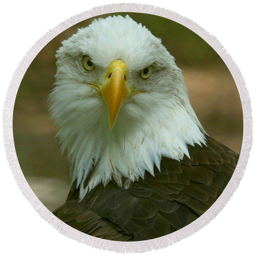 Eagles Round Beach Towel featuring the photograph Regal Eagle Portrait by Myrna Bradshaw