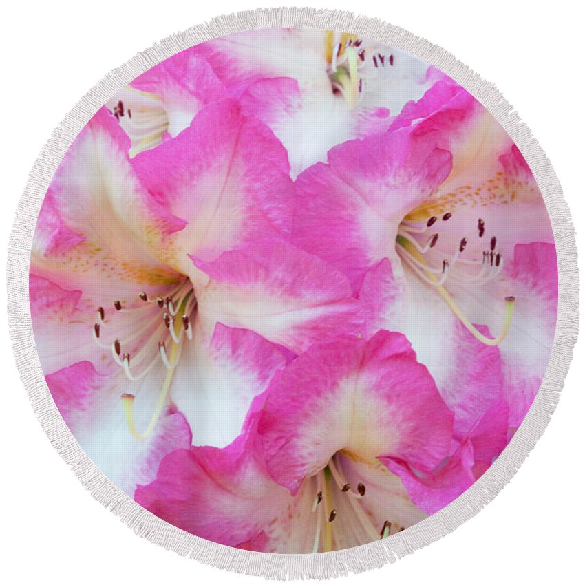 Rhododendron Round Beach Towel featuring the photograph Rhododendron- Hot Pink by Regina Geoghan