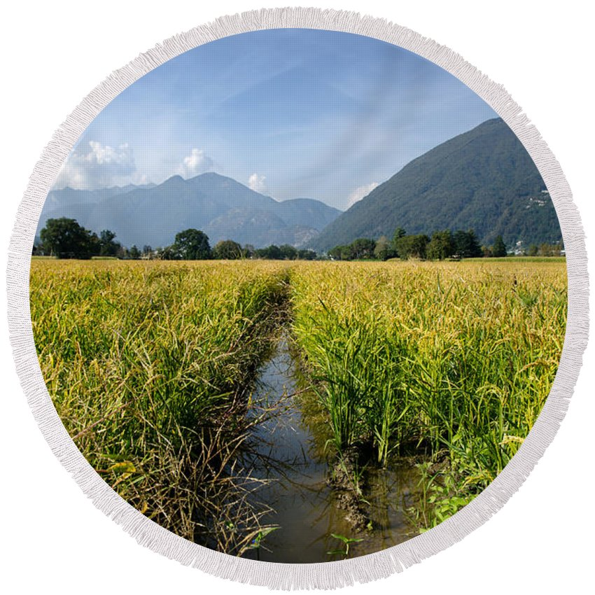 Rice Round Beach Towel featuring the photograph Rice Field by Mats Silvan