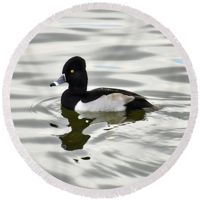 Ring Necked Duck Round Beach Towel featuring the photograph Ring Necked Duck by Saija Lehtonen