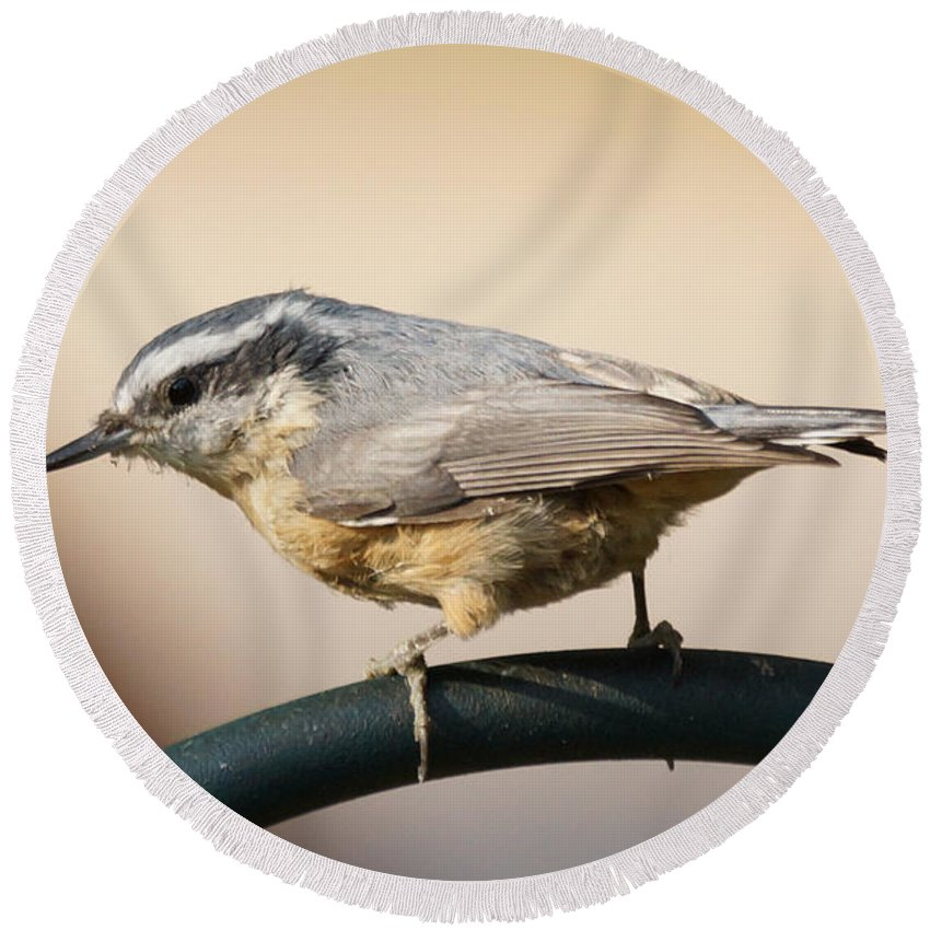 Birds Round Beach Towel featuring the photograph Rose Breasted Nuthatch by Lori Tordsen