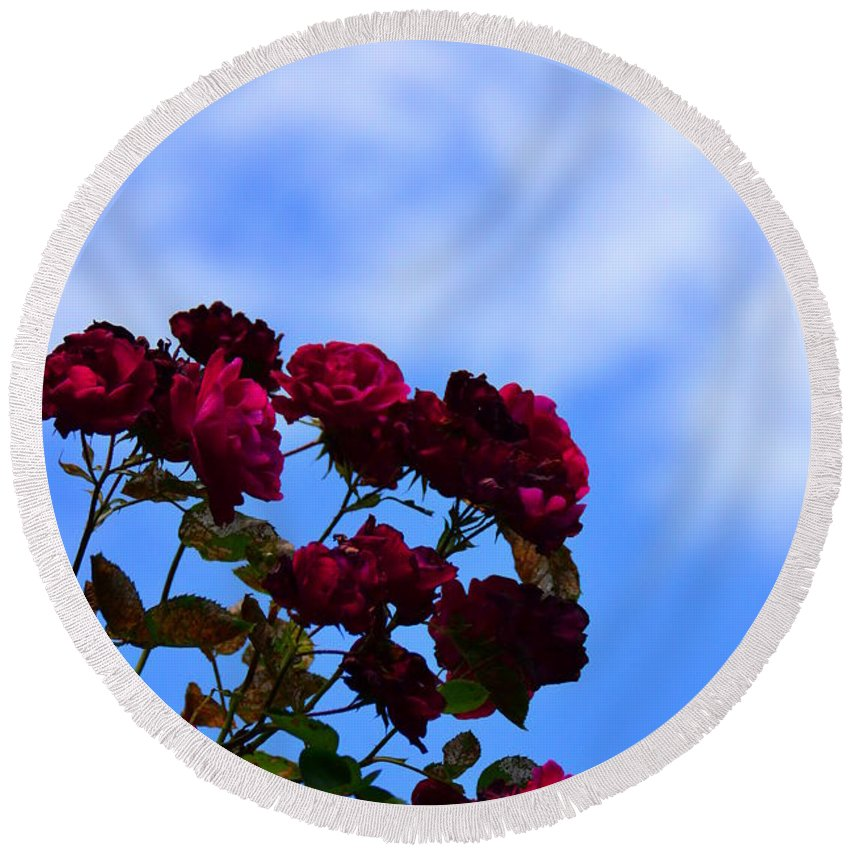 Rose Round Beach Towel featuring the photograph Roses In The Sky by Bonnie Myszka