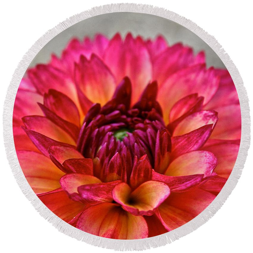 Landscape Round Beach Towel featuring the photograph Rosy Dahlia by Susan Herber