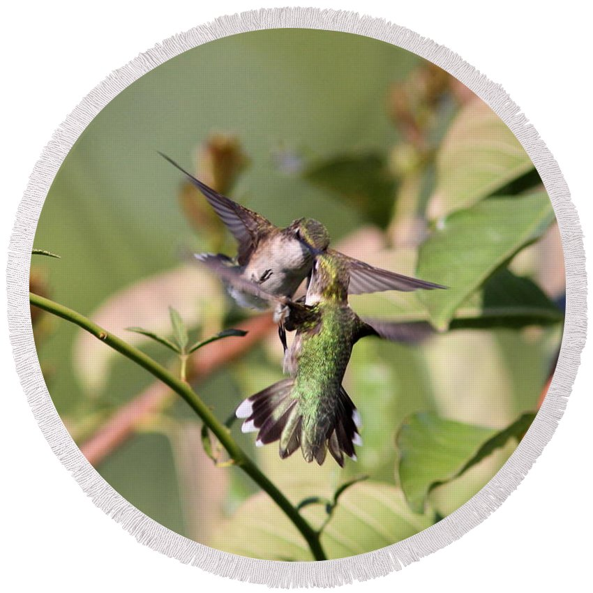 Hummingbird Round Beach Towel featuring the photograph Ruby-throated Hummingbird - An Altercation by Travis Truelove
