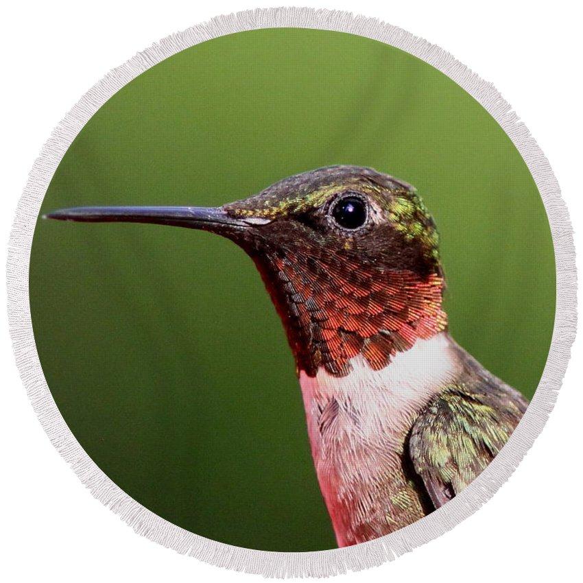 Hummingbird Round Beach Towel featuring the Ruby-throated Hummingbird - Macho Man by Travis Truelove