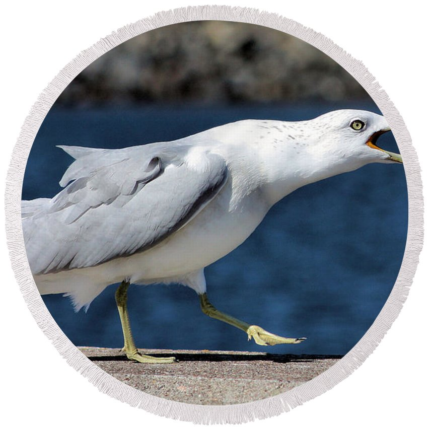 Seagull Round Beach Towel featuring the photograph Ruffled Feathers by Kristin Elmquist