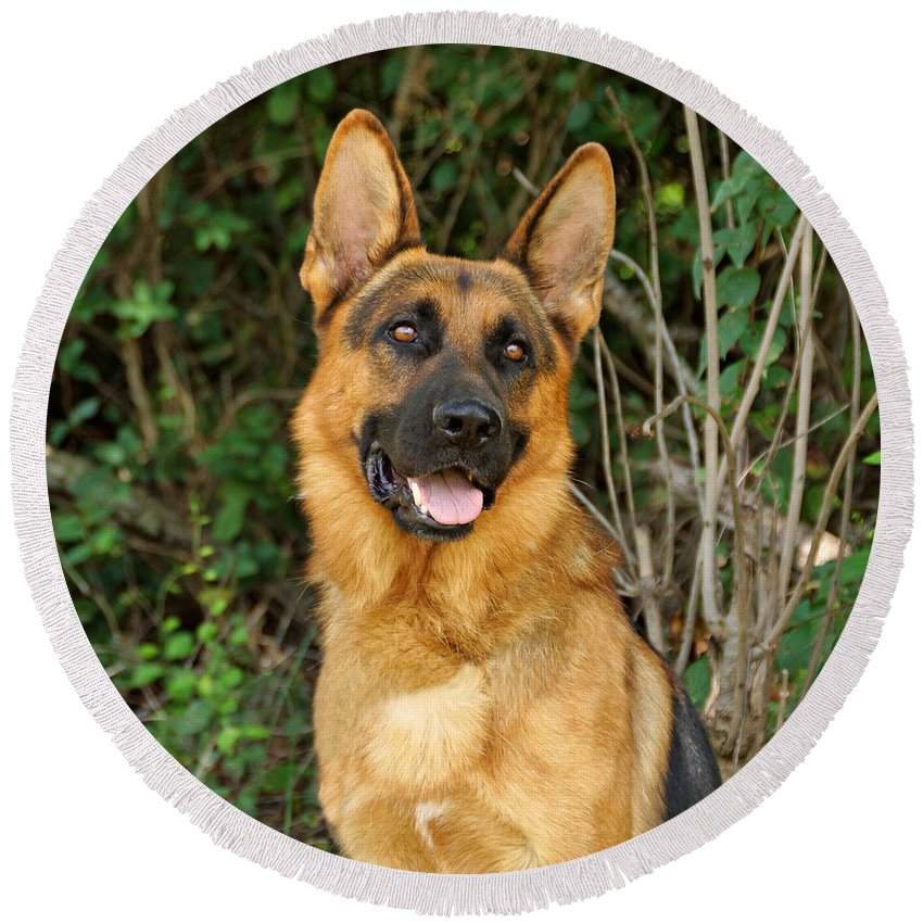 German Shepherd Round Beach Towel featuring the photograph Ruger by Sandy Keeton
