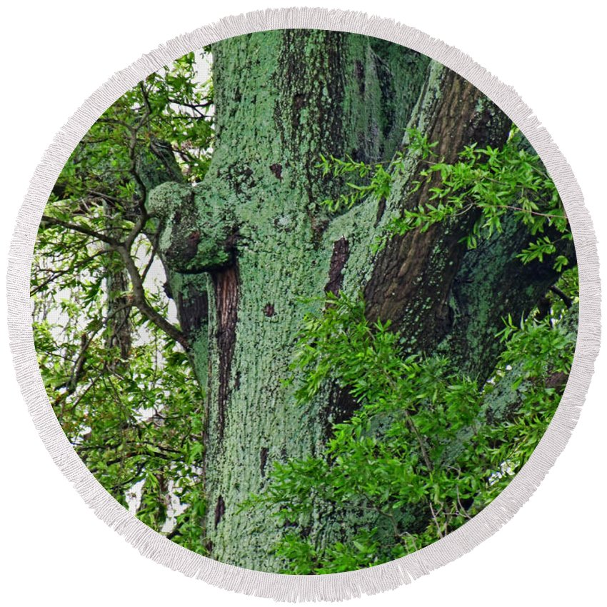 Round Beach Towel featuring the photograph Rural Trees Close Up by Debbie Portwood