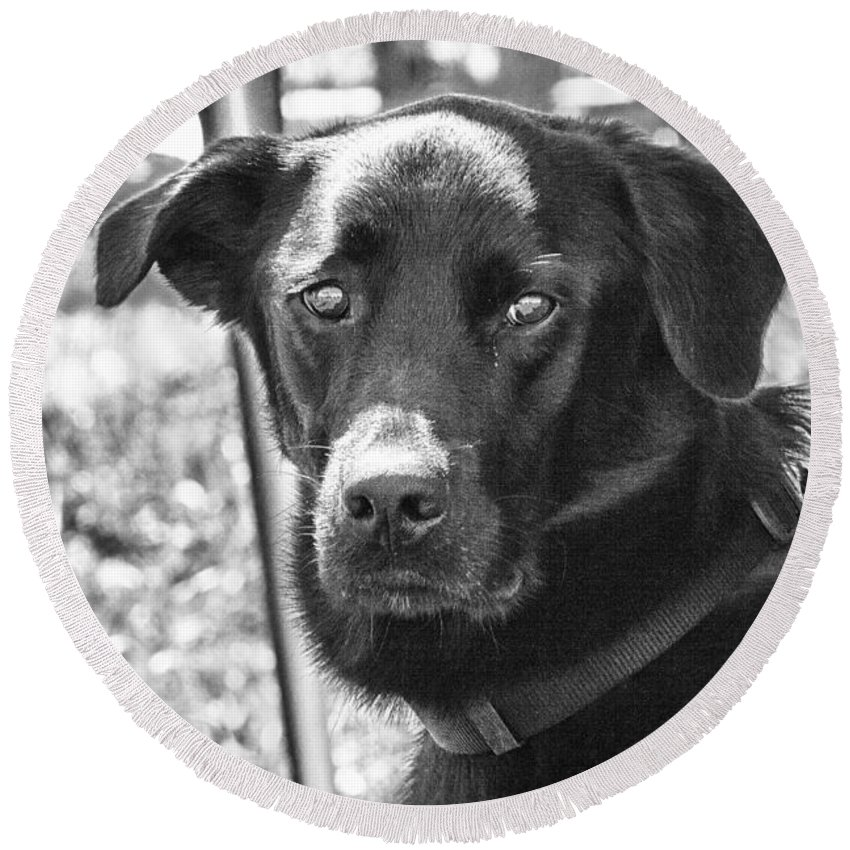 Dog Round Beach Towel featuring the photograph Sad Eyes by Eunice Gibb
