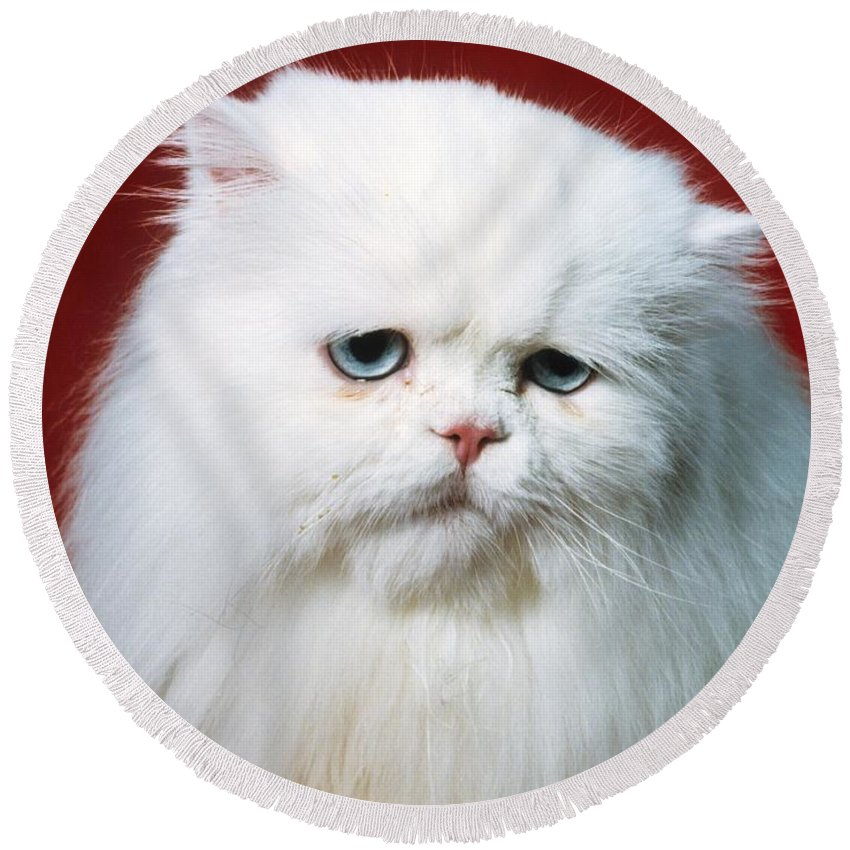 Persian Cat Round Beach Towel featuring the photograph Sad Persian Cat by Larry Allan