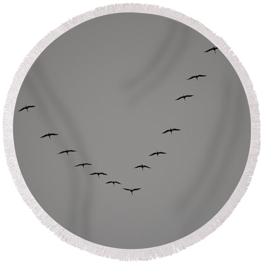 Birds Round Beach Towel featuring the photograph Sand Hill Cranes Sign Of Spring by Donna Brown