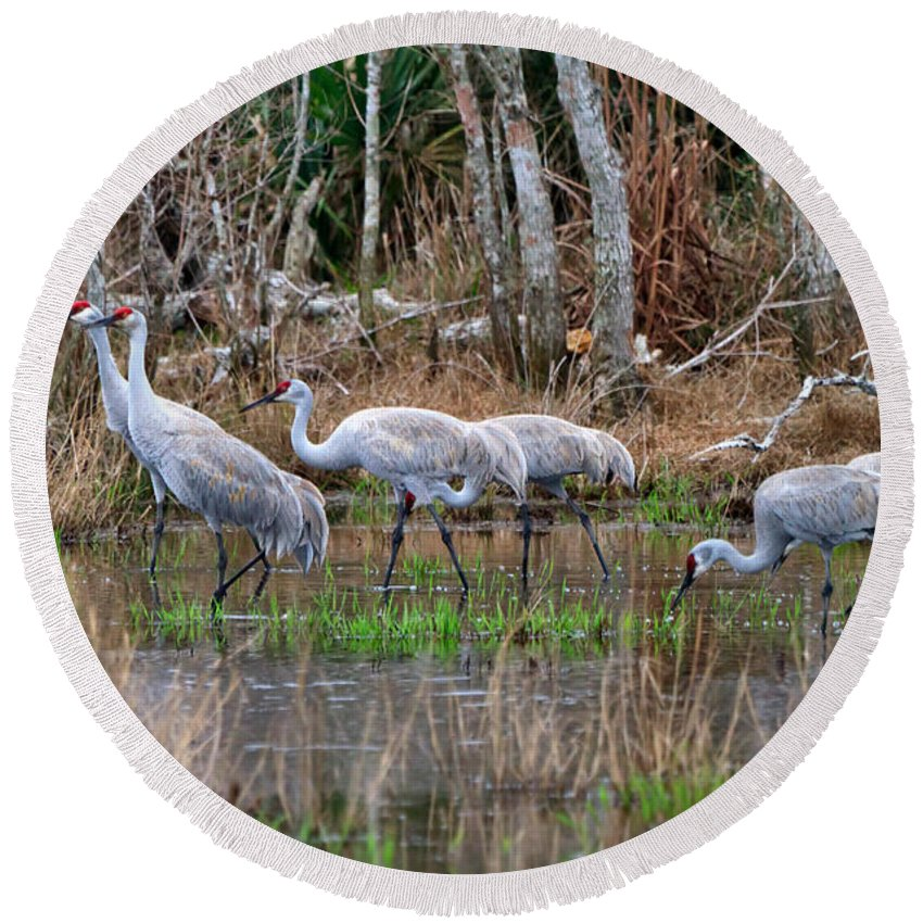 Sandhill Cranes Round Beach Towel featuring the photograph Sandhill Cranes In The Winter Marsh by Louise Heusinkveld