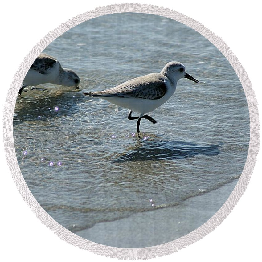 Sandpiper Round Beach Towel featuring the photograph Sandpiper 7 by Joe Faherty