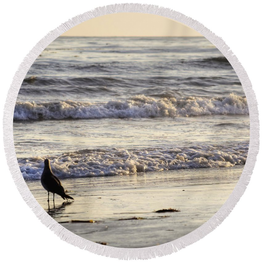 Seagull Round Beach Towel featuring the photograph Santa Barbara 7 by Jessica Velasco