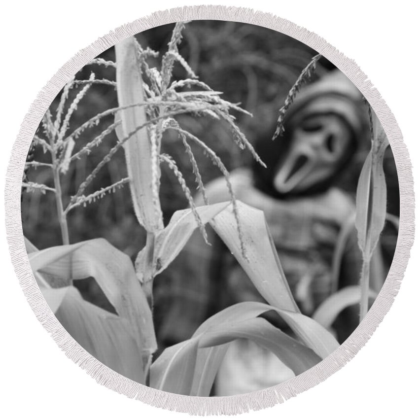 Corn Round Beach Towel featuring the photograph Scarecrow In The Corn Black And White by James BO Insogna