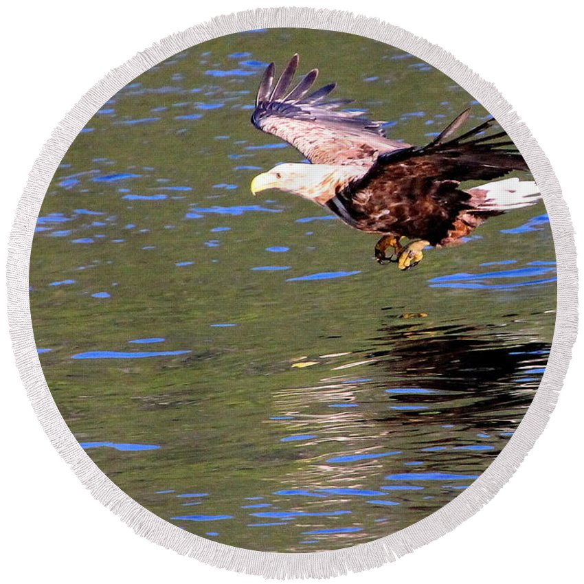 Sea Eagle Round Beach Towel featuring the photograph Sea Eagle's Water Landing by Laurel Talabere