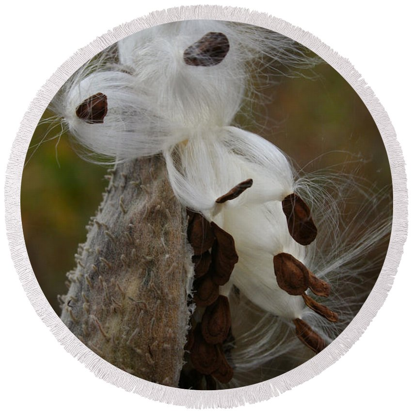 Outdoors Round Beach Towel featuring the photograph Seed Face by Susan Herber