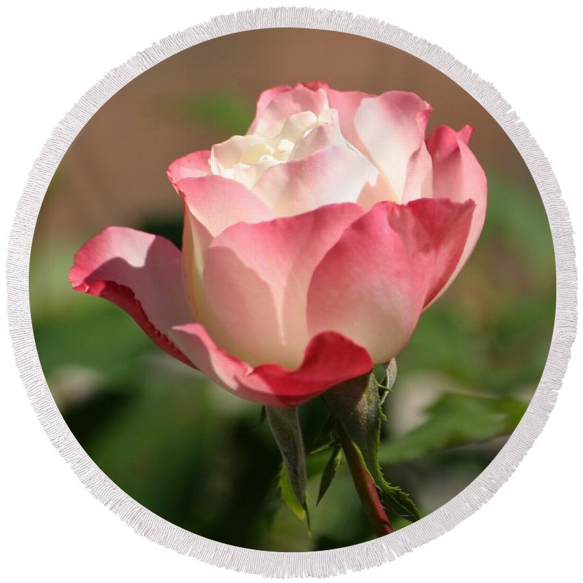 Roses Round Beach Towel featuring the photograph Shades Of Pink by Living Color Photography Lorraine Lynch