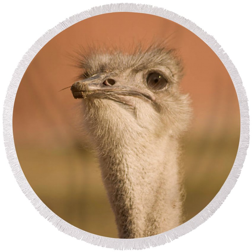 Ostrich Round Beach Towel featuring the photograph Shaking My Head by Trish Tritz