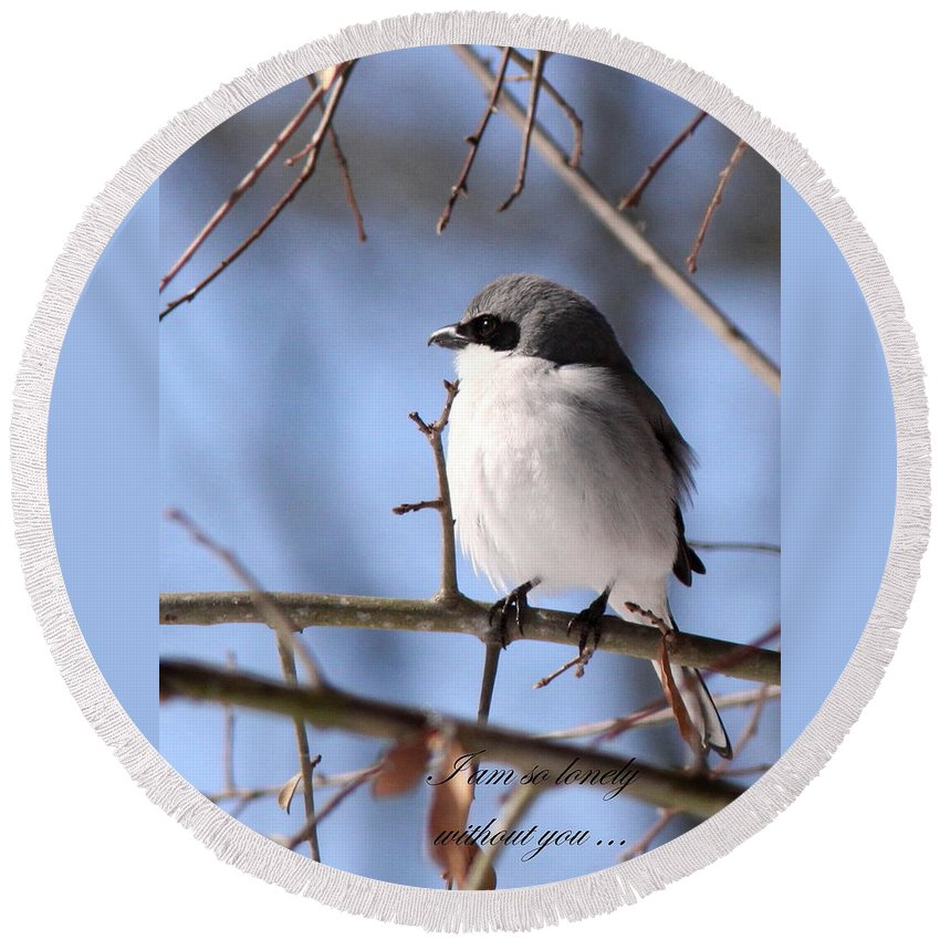 Shrike Round Beach Towel featuring the photograph Shrike - Lonely - Missing You by Travis Truelove