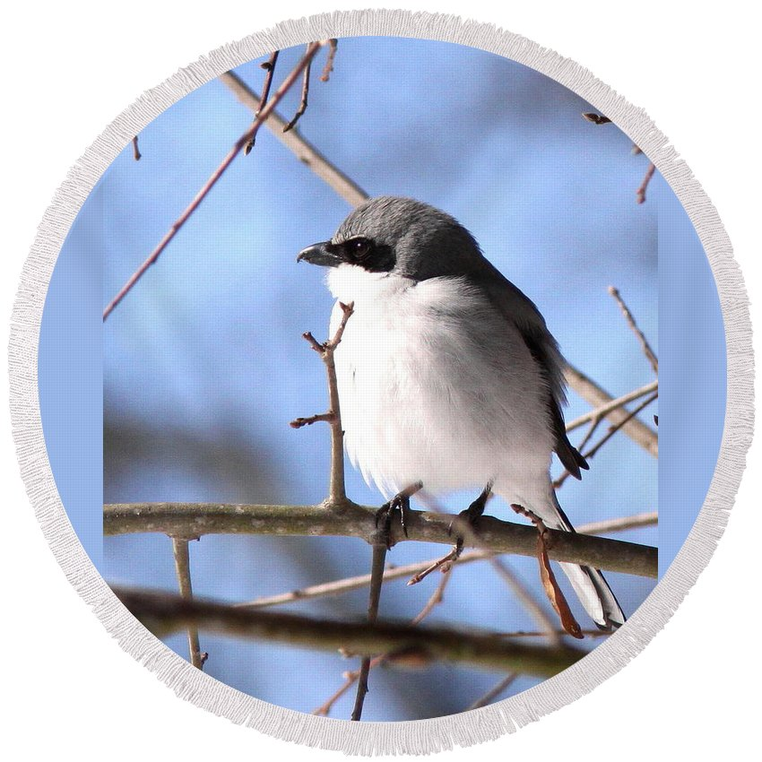 Shrike - Lonely Round Beach Towel featuring the photograph Shrike - Lonely by Travis Truelove