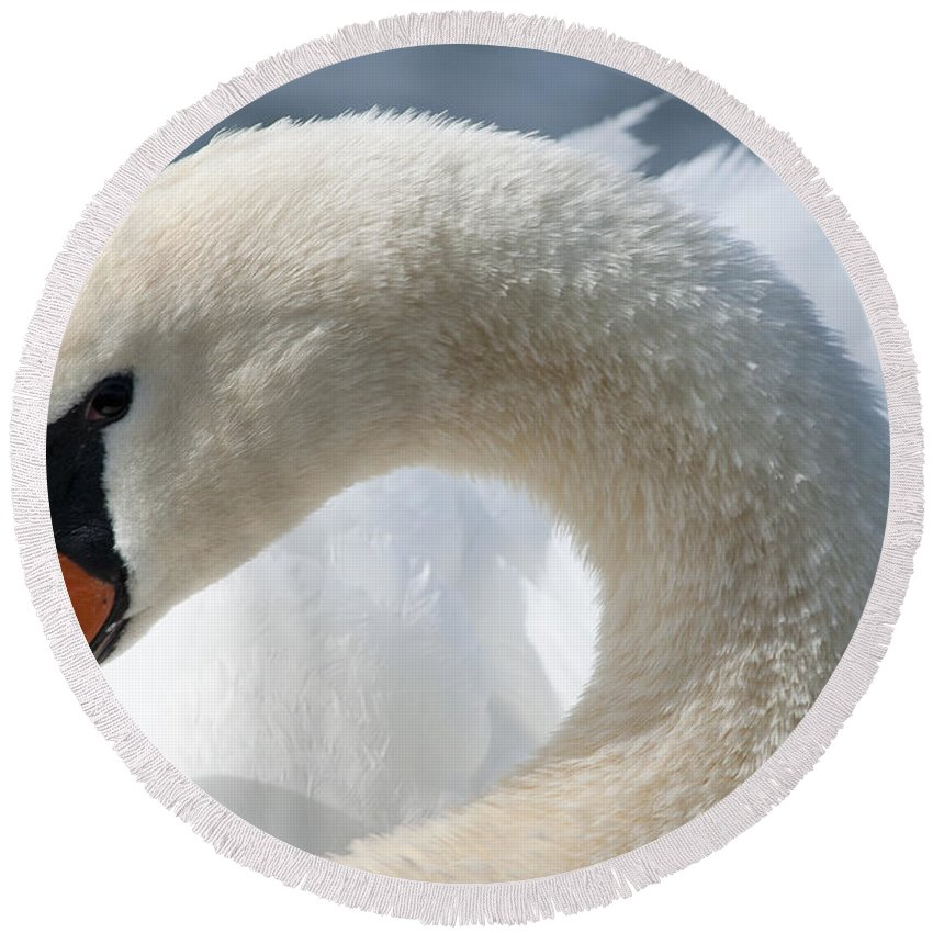 Animal Round Beach Towel featuring the photograph Shy Swan by Andrew Michael