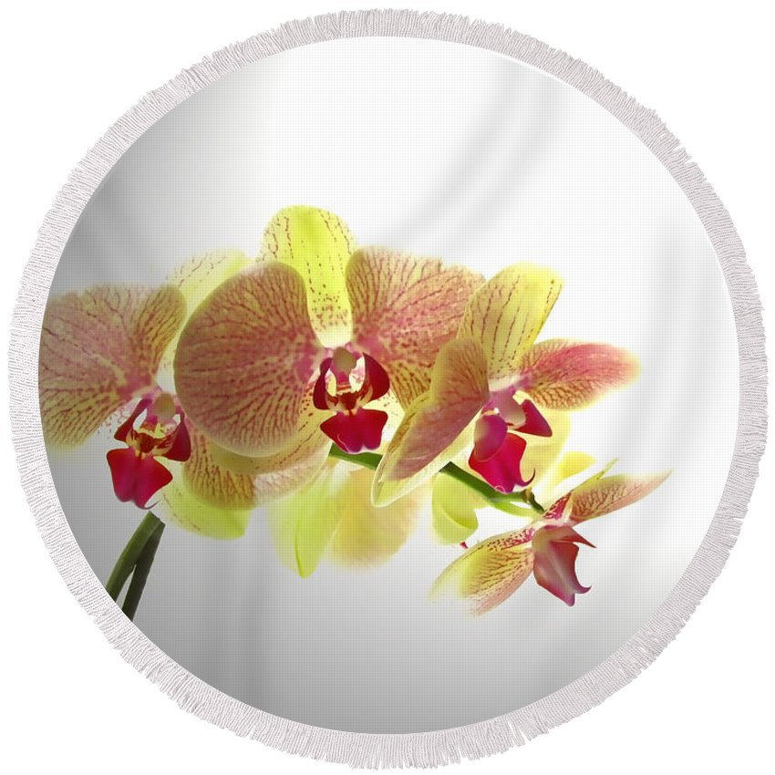 Nature Round Beach Towel featuring the photograph Simplified Orchids II by Debbie Portwood