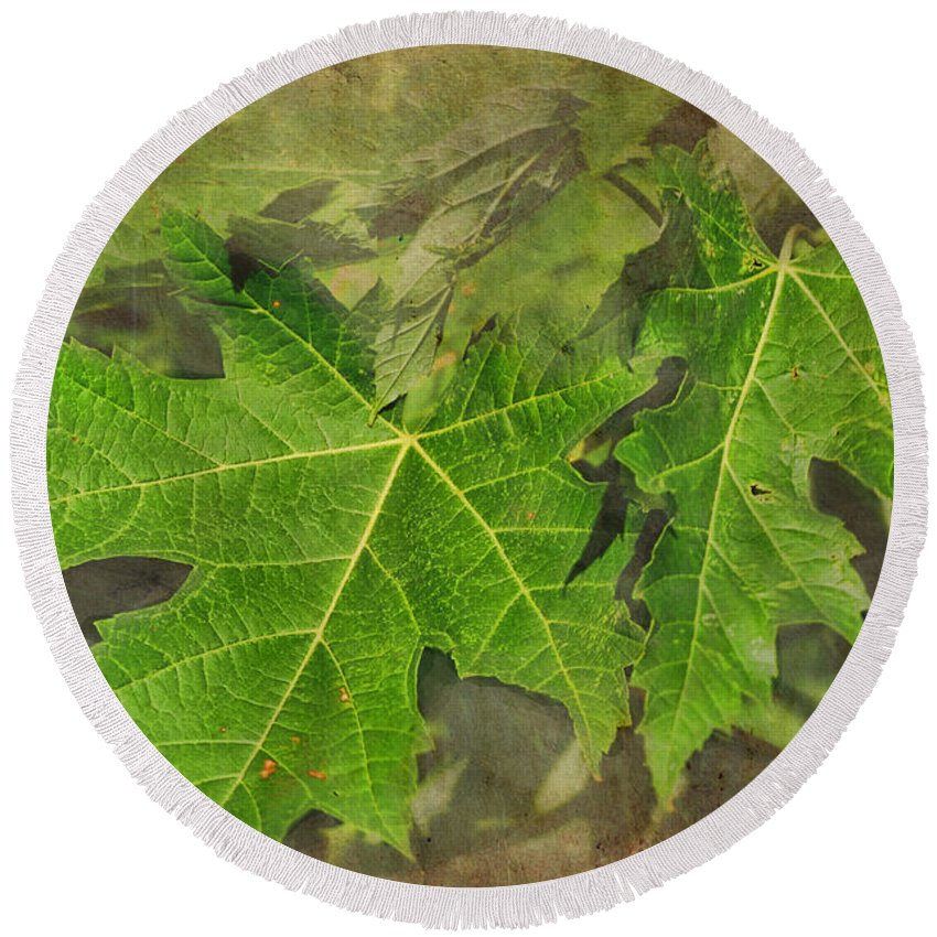 Nature Round Beach Towel featuring the photograph Simply Summer Maple Leaves by Debbie Portwood