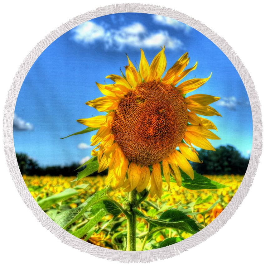 Sunflower Round Beach Towel featuring the photograph Single by Debbi Granruth