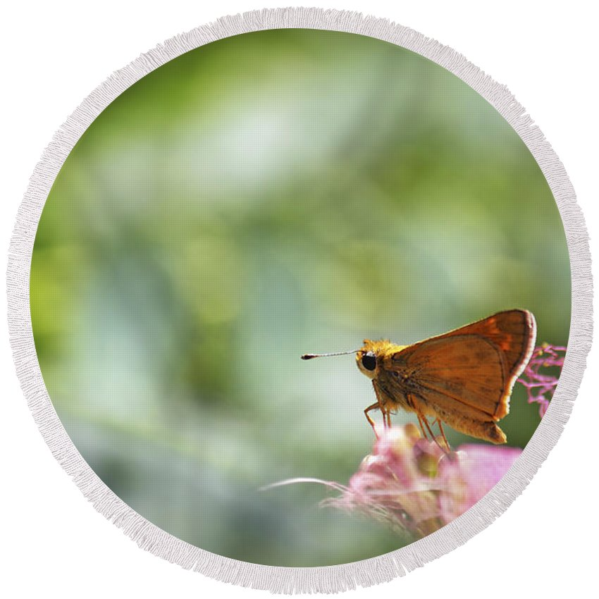 Macro Round Beach Towel featuring the photograph Skipper Butterfly Dreamscape by Jason Politte