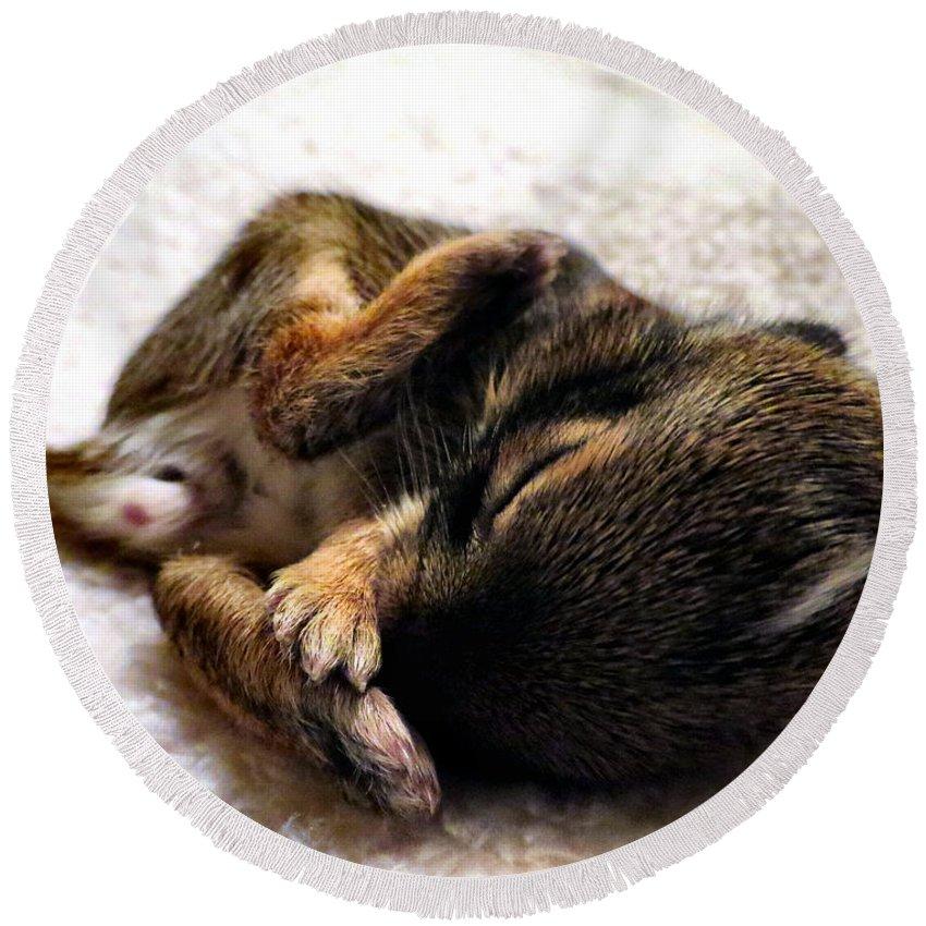 Bunny Round Beach Towel featuring the photograph Sleeper by Art Dingo