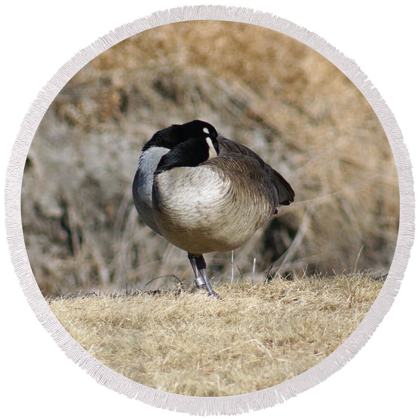 Goose Round Beach Towel featuring the photograph Sleeping On One Leg by Lori Tordsen