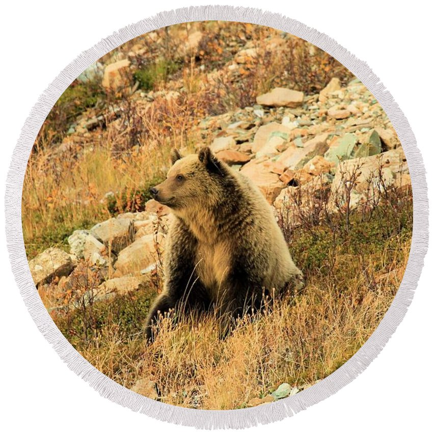 Grizzly Bear Round Beach Towel featuring the photograph Smelling The Roses by Adam Jewell