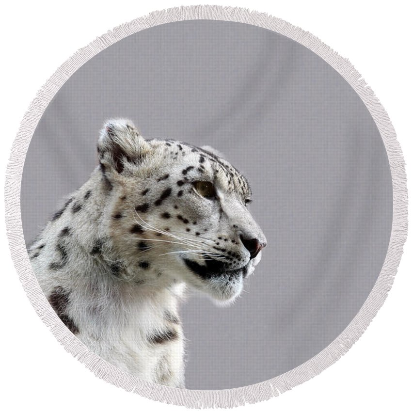 Animal Round Beach Towel featuring the photograph Snow Leopard by Paul Fell