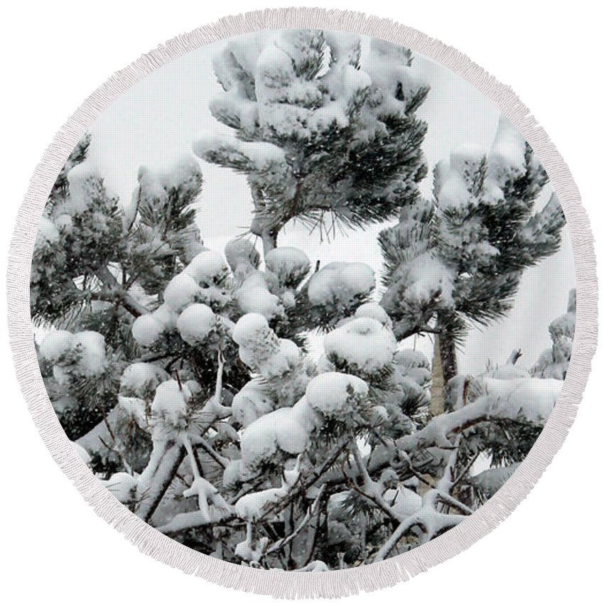 Snow Round Beach Towel featuring the photograph Snow On The Pines by Barbara Griffin