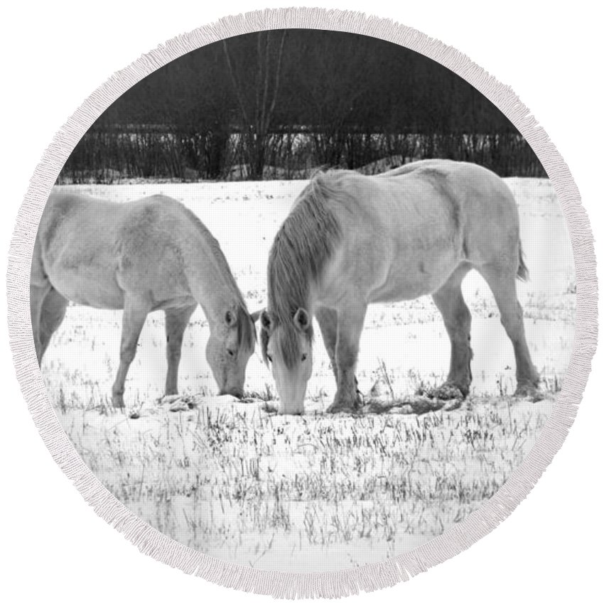 Animal Photograph Round Beach Towel featuring the photograph Snow White Beauties by Ms Judi