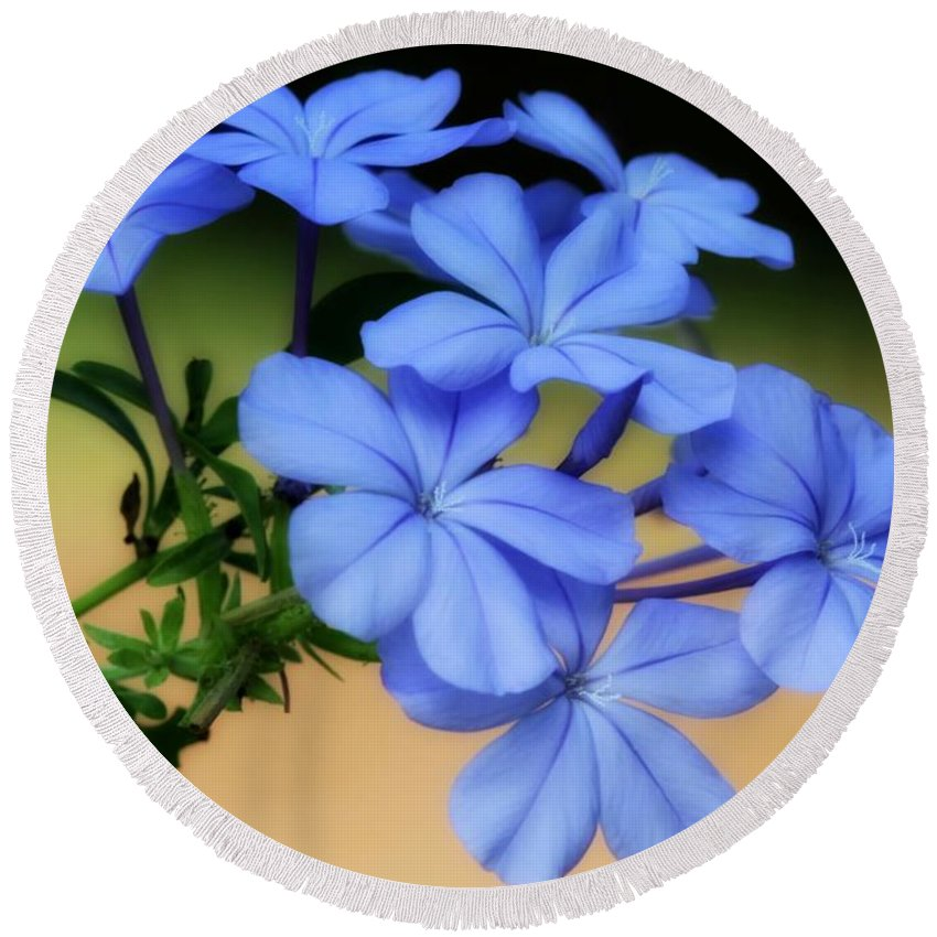 Blue Round Beach Towel featuring the photograph Soft Blue Plumbago by Sabrina L Ryan