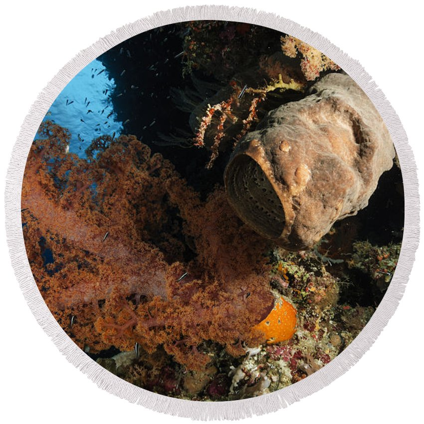 Ocean Round Beach Towel featuring the photograph Soft Coral Seascape, Indonesia by Todd Winner