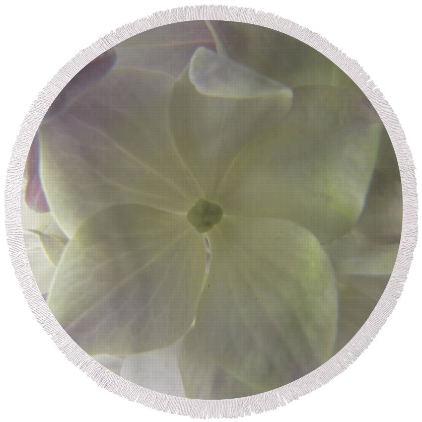 Botanical Round Beach Towel featuring the photograph Softly Lit Hygrangea Bloom by Debbie Portwood