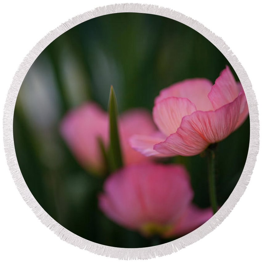 Poppy Round Beach Towel featuring the photograph Sordid Poppies by Mike Reid