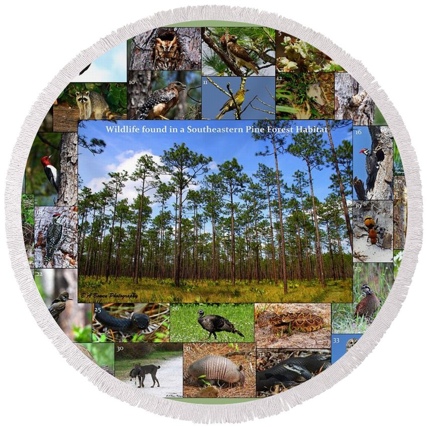Pine Forest Round Beach Towel featuring the photograph Southeastern Pine Forest Wildlife Poster by Barbara Bowen
