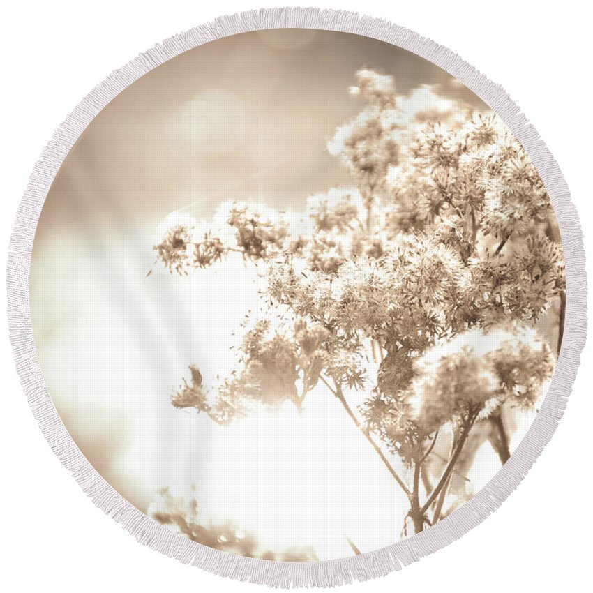 Sepia Round Beach Towel featuring the photograph Sparkly Weeds In Sepia by Cheryl Baxter