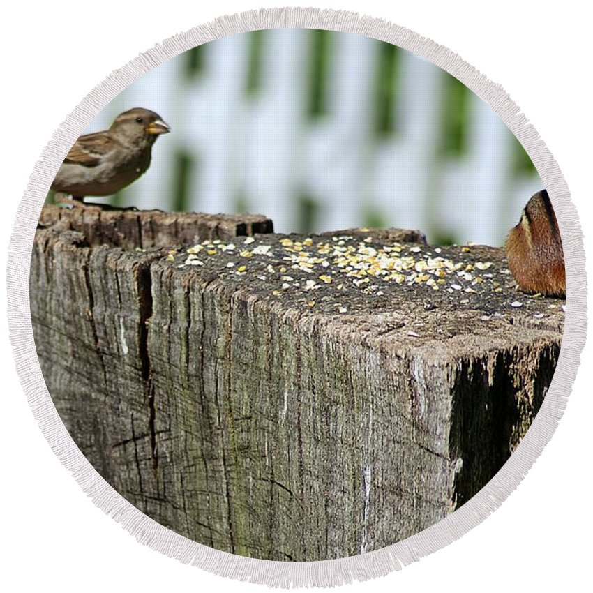 Sparrow Round Beach Towel featuring the photograph Sparrow And Chipmunk Coexist by Joe Faherty