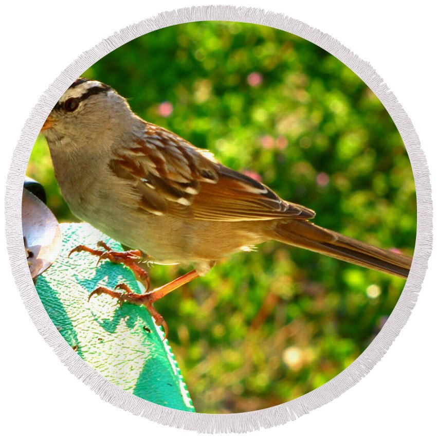 Nature Round Beach Towel featuring the photograph Sparrow In Morning Light by Debbie Portwood