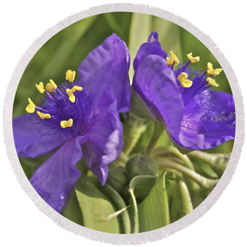 3-petaled Round Beach Towel featuring the photograph Spiderwort 2273 by Michael Peychich