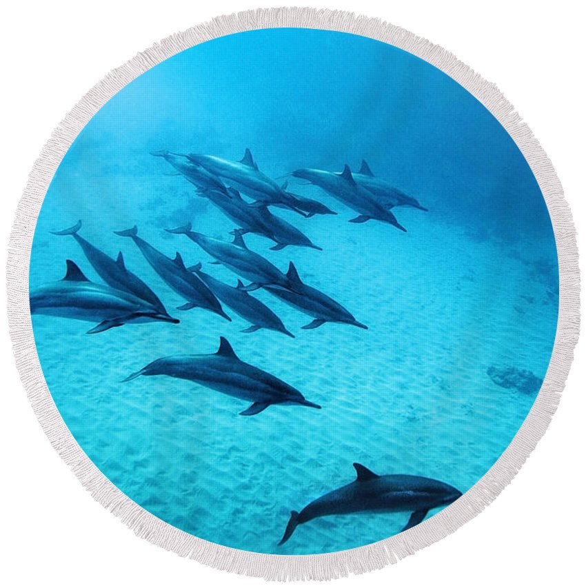 Dolphin Round Beach Towels