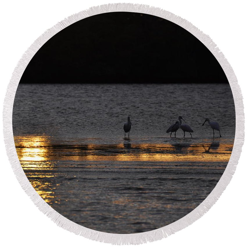 Spoonbill Round Beach Towel featuring the photograph Spoonbill Gold by Rich Bodane