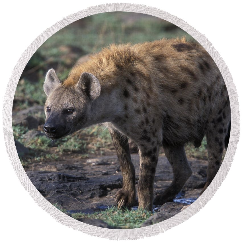 Africa Round Beach Towel featuring the photograph Spotted Hyena by Sandra Bronstein